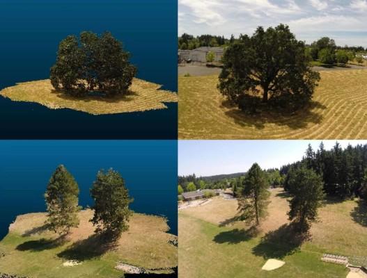 Simulador forestal en 3D para predecir el cambio climático